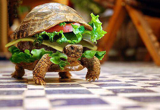 tortue-hamburger.jpg